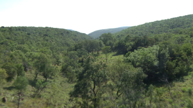 aerial view of forest in waterberg biosphere - nature reserve stock videos & royalty-free footage