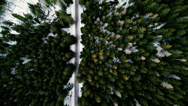 Vista aérea del bosque en invierno