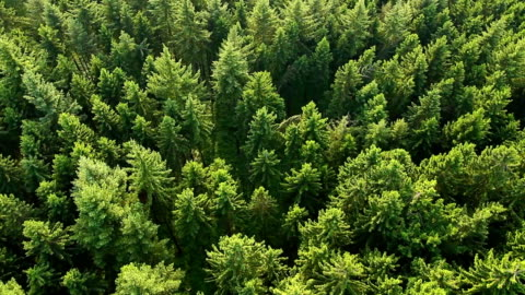 aerial view of forest. part2 - environment stock videos & royalty-free footage