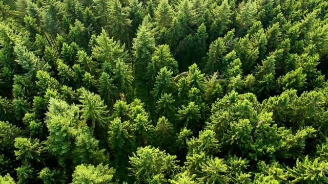 aerial view of forest. part2 - evergreen stock videos & royalty-free footage