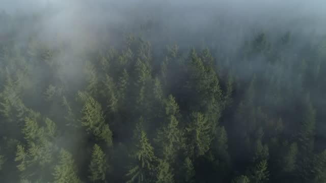 aerial view of forest through fog, autumn, black forest, germany - シュバルツバルト点の映像素材/bロール