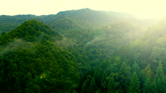 stockvideo's en b-roll-footage met luchtfoto van forest - bergketen
