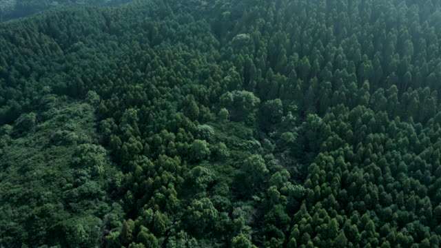 aerial view of forest - 木立点の映像素材/bロール