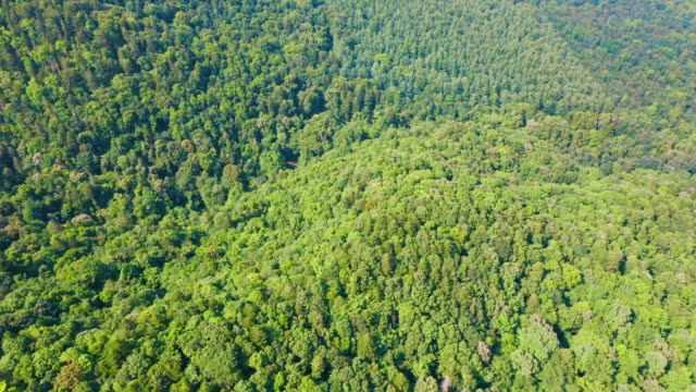 aerial view of forest - liyao xie stock videos & royalty-free footage