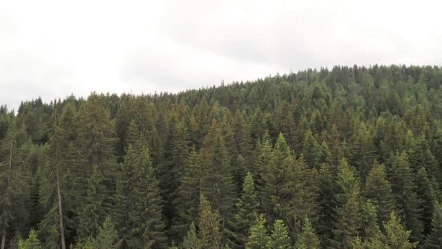 vídeos y material grabado en eventos de stock de vista aérea del bosque - protección de fauna salvaje