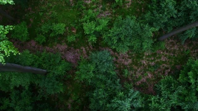 Luftbild von forest