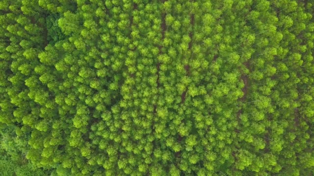 aerial view of forest - environmentalist stock videos & royalty-free footage