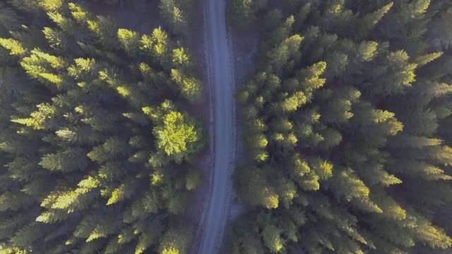 aerial view of forest - air to air shot stock videos and b-roll footage