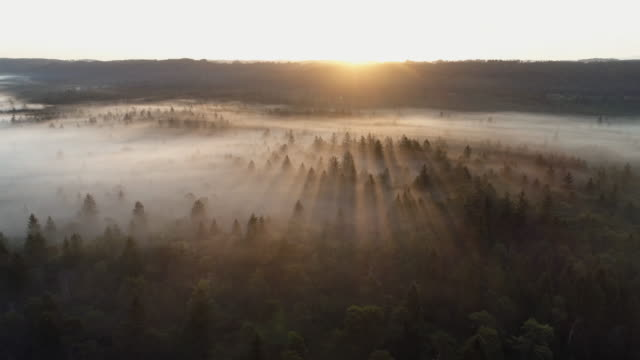 stockvideo's en b-roll-footage met aerial view of forest with fog at sunrise. pupplinger au, wolfratshausen, isar river, upper bavaria, bavaria, germany. - back lit
