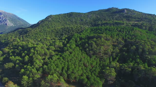 aerial view of forest with road - andalucia stock videos & royalty-free footage
