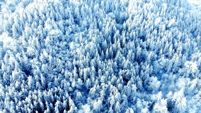 vídeos de stock e filmes b-roll de aerial view of forest with snow in winter - pinhal