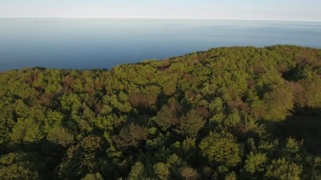 aerial view of forested lakeshore at sunrise - lakeshore stock videos & royalty-free footage