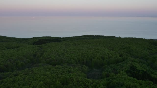 aerial view of forested lakeshore at sunrise - lakeshore stock videos and b-roll footage