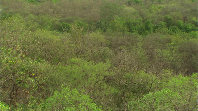 aerial view of gir national park - pan shot - tropical rainforest stock videos & royalty-free footage