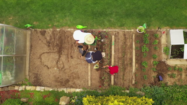 aerial view of grandparents planting plants with grandchildren - gardening stock videos & royalty-free footage