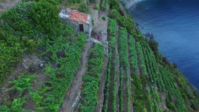 aerial view of grape farm at cinque terre coast in riomaggiore - cinque terre stock videos and b-roll footage