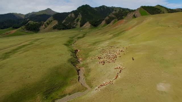 luftaufnahme von grünland in tianshan berg,xinjiang,china. - herde stock-videos und b-roll-filmmaterial