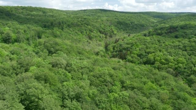 緑の森トップの空撮 - シュバルツバルト点の映像素材/bロール