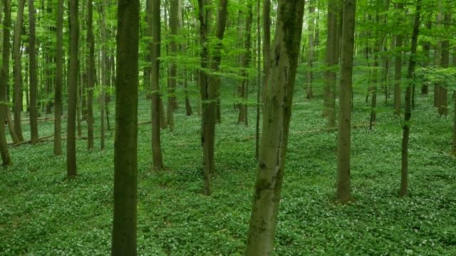緑の森の下草の航空写真 - シュバルツバルト点の映像素材/bロール