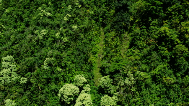 aerial view of green rainforest valley maui hawaii - hawaii inselgruppe stock-videos und b-roll-filmmaterial