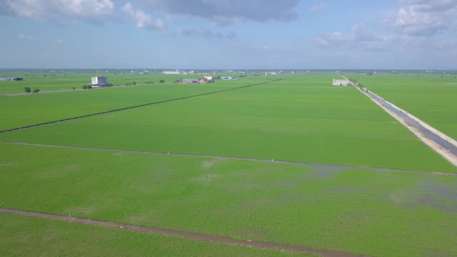 vidéos et rushes de aerial view of green rice field in malaysia - malaysian culture