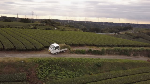 aerial view of green tea farmers in japan - shizuoka prefecture stock videos and b-roll footage