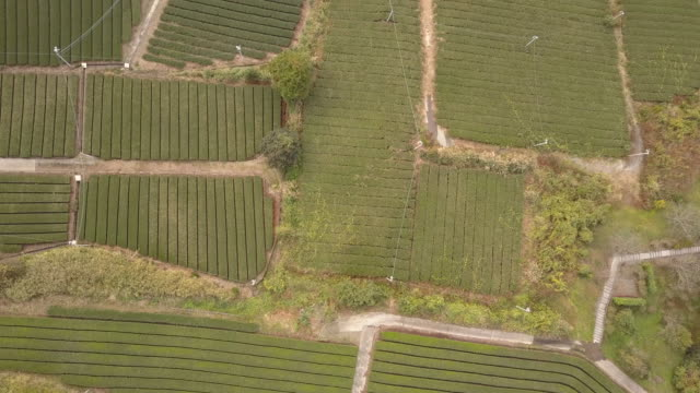 aerial view of green tea farms in japan - 郊外の風景点の映像素材/bロール