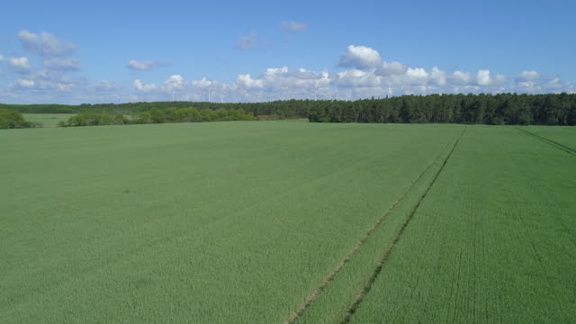 aerial view of green wheat field with wind turbines in the background - weizen stock-videos und b-roll-filmmaterial