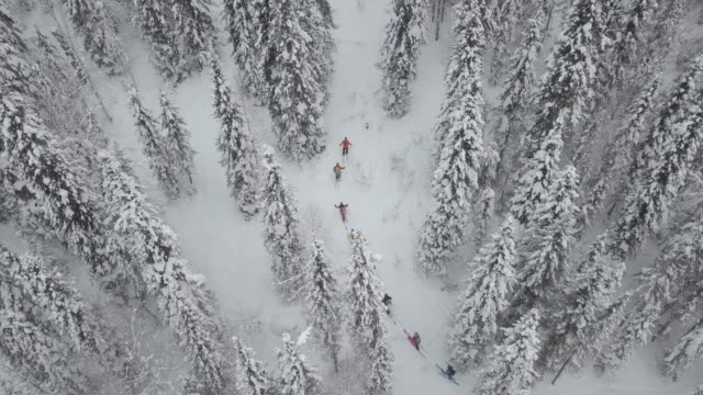 vídeos de stock e filmes b-roll de aerial view of group of skiers touring up mountain - rússia