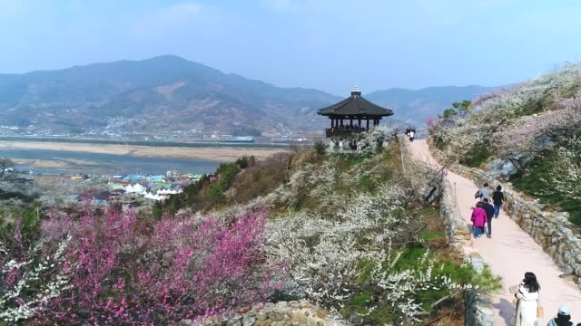vídeos de stock e filmes b-roll de aerial view of gwangyang maehwa(apricot flower) village in jeollanam-do, south korea - casa de jardim