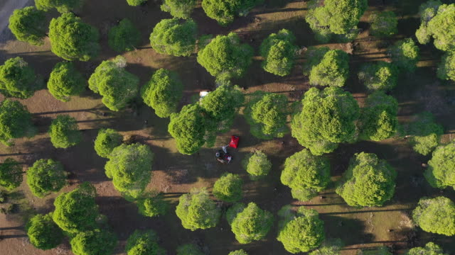 aerial view of happy family camping in forest - middle eastern ethnicity stock videos & royalty-free footage
