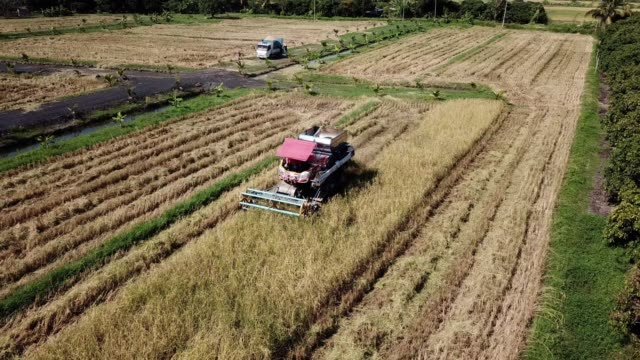 Aerial view of Harvesting Corn Agriculture concept