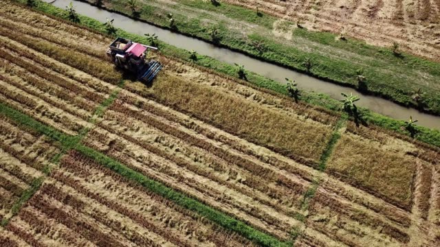 aerial view of harvesting corn agriculture concept - satoyama scenery stock videos & royalty-free footage
