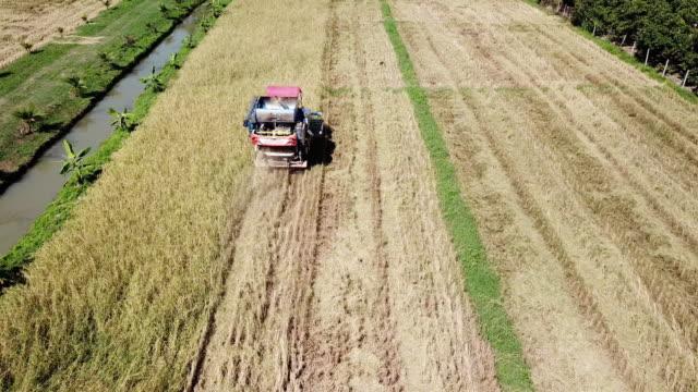 aerial view of harvesting corn - satoyama scenery stock videos & royalty-free footage