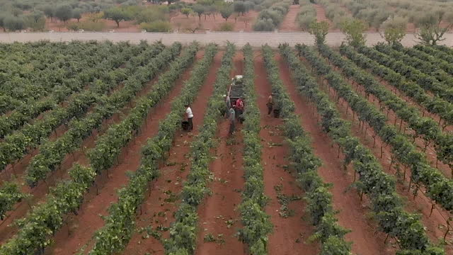 4k aerial view of harvesting in salento / apulia / italy - agricultural machinery stock videos & royalty-free footage