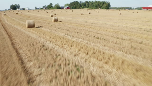aerial view of hay rolls on a large plain field - hay field stock videos & royalty-free footage