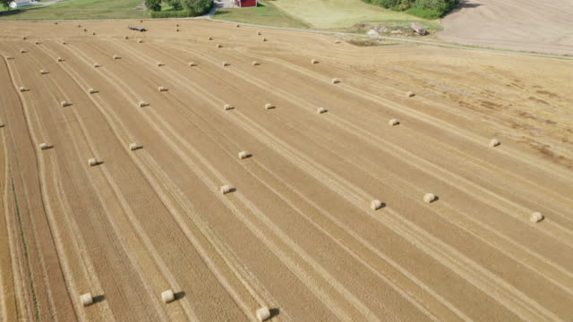 aerial view of hay rolls on a large plain field - haystack stock videos & royalty-free footage