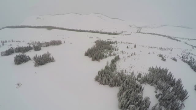 Aerial view of herdsmen and snow-covered woods.