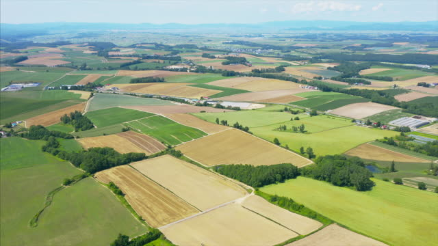 aerial view of hokkaido fields - natural condition stock videos & royalty-free footage
