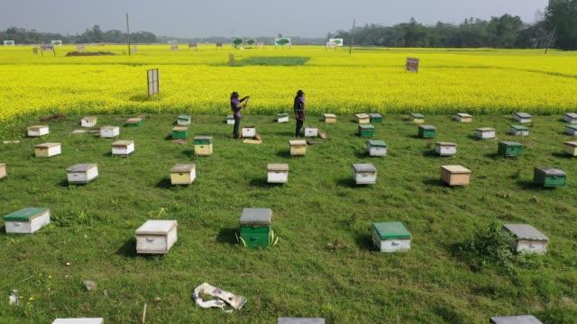 vidéos et rushes de aerial view of honey farming plant near dhaka. on january 21 in munshigonj,bangladesh. honey farming is popular inmunshigonj region near dhaka.... - ruche
