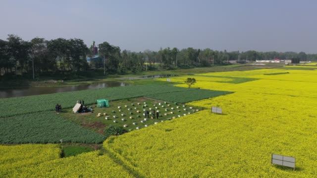 aerial view of honey farming plant near dhaka on january 21 in munshigonjbangladesh honey farming is popular inmunshigonj region near dhaka... - pollination stock videos & royalty-free footage
