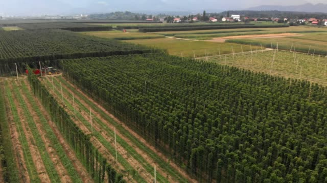 aerial view of hops field - hops crop stock videos and b-roll footage