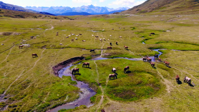 vídeos de stock e filmes b-roll de aerial view of horses grazing in nature with stunning mountain view. - espanha