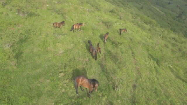 aerial view of horses grazing on hill - hill stock videos & royalty-free footage