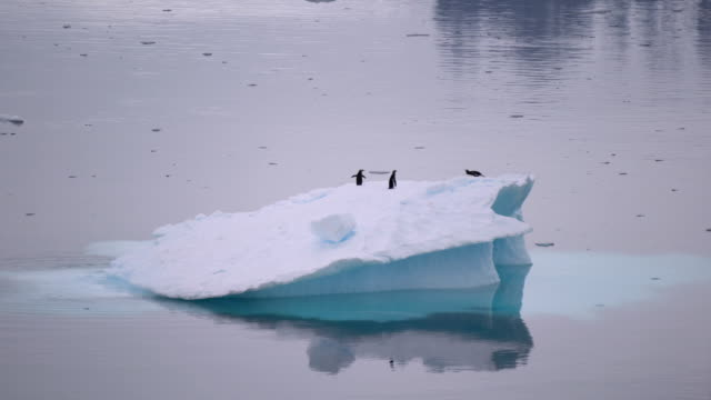 aerial view of icebergs in antarctica - penguin stock videos & royalty-free footage