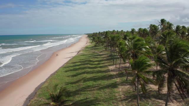vidéos et rushes de vue aérienne d'imbassai, bahia, brésil - arbre tropical