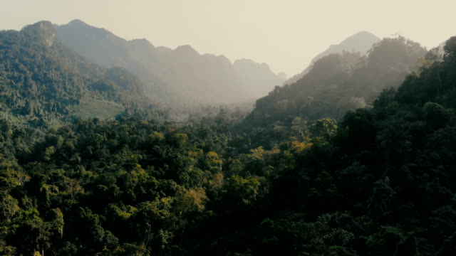 aerial view of jungles at sunset - drone point of view stock videos & royalty-free footage