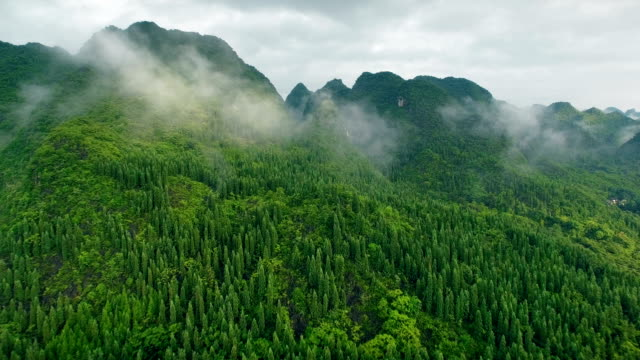 aerial view of  karst peaks forest(wanfenglin),guizhou,china. - tree stock videos & royalty-free footage