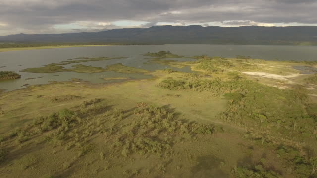 aerial view of lake elementeita shoreline with impala herd - animal markings stock videos & royalty-free footage
