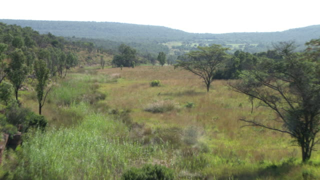 aerial view of landscape in waterberg biosphere - wildlife reserve stock videos & royalty-free footage